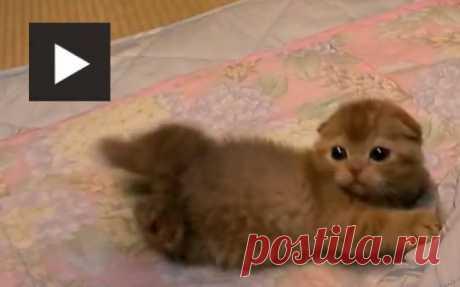 (7) LaLindsay2 приколол(а) это к доске Cute Animals