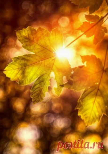 Странный свет - неяркий и неподвижный - был непохож на солнечный. Это светили осенние листья. (Константин Паустовский).🍁🍂