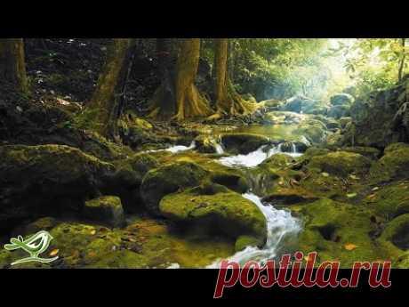 Расслабляющая Музыка с Пением Птиц - Красивая Музыка на Фортепиано и Гитаре от Soothing Relaxation