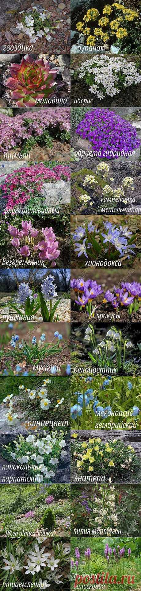 Plants for the Alpine hill | Floriculture | the Female website