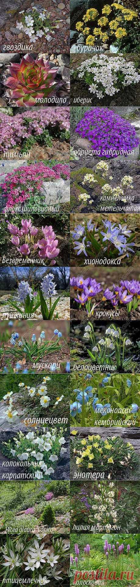 Растения для альпийской горки | Цветоводство | Женский сайт