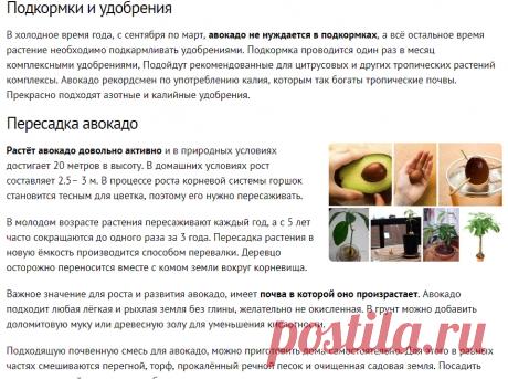 Как вырастить авокадо из косточки в домашних условиях и на участке?