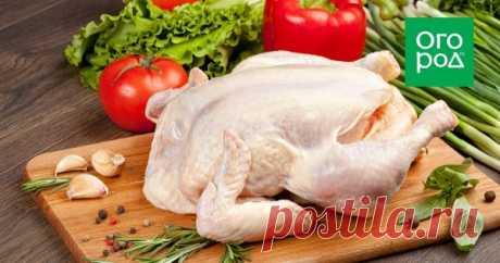 Три блюда из одной курицы: как экономно разделать птицу Что делать, если надо срочно накормить семью из четырех человек полноценным обедом из нескольких блюд, а из мясного сырья под руками имеется только одна сырая курица? Рассказываем, как ее разделать подходящим образом и какие блюда из нее приготовить.