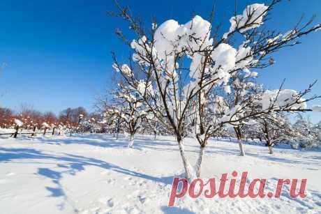 Каким будет декабрь 2019: долгосрочный прогноз погоды на весь месяц | По полочкам (Огород.ru)