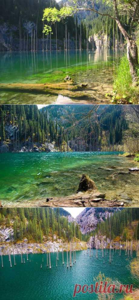 Озеро Каинды - затонувший лес в Казахстане. Оно образовалось в результате массивного землетрясения в 1910 году. Произошел огромный оползень, который заблокировал ущелье и появилась естественная плотина. Постепенно вода поднялась и затопила этот естественный резервуар