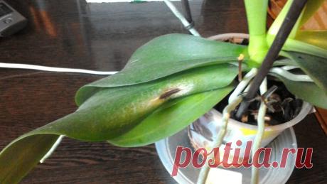 Орхидея отцвела, что делать дальше ( фото, видео), отцвела.