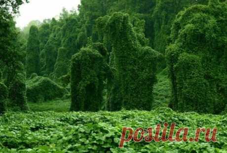 5 растений из кошмаров, которые существуют на самом деле