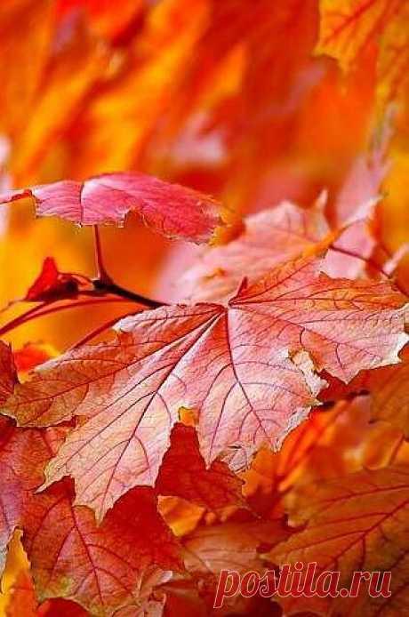 ...Букет из жёлтых листьев на рояле, я вам сыграю музыку дождя. Я вам сыграю музыку печали, так тихо плачет осень, уходя....