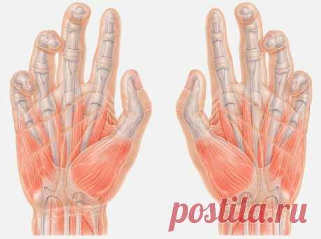 Оздорови себя с помощью минутного китайского массажа пальцев | Эксперимент | Яндекс Дзен