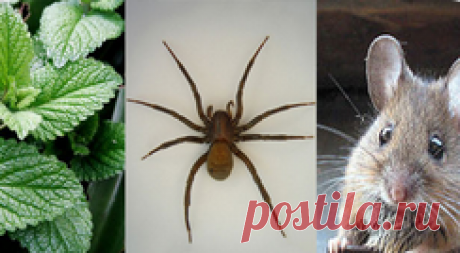 Если у вас в доме есть это растение, то можете забыть о мышах и насекомых!