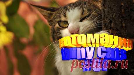 видео котов смешных, смешные видео котов, видео котов смешное, кот смешное видео, видео с котами, коты видео, видео котов, видео котов приколы, говорящие коты видео, животные смешные видео, видео животных смешные, смешное видео животные, смешно животные, животные смешное, коты приколы, приколы для котов, кота приколы, смешные кошки, кошки видео смешные, смешная кошка, видео кошек смешное, видео кошек смешные, кошка смешное видео, кошка смешная видео, видео кошки смешные, смешные кошек