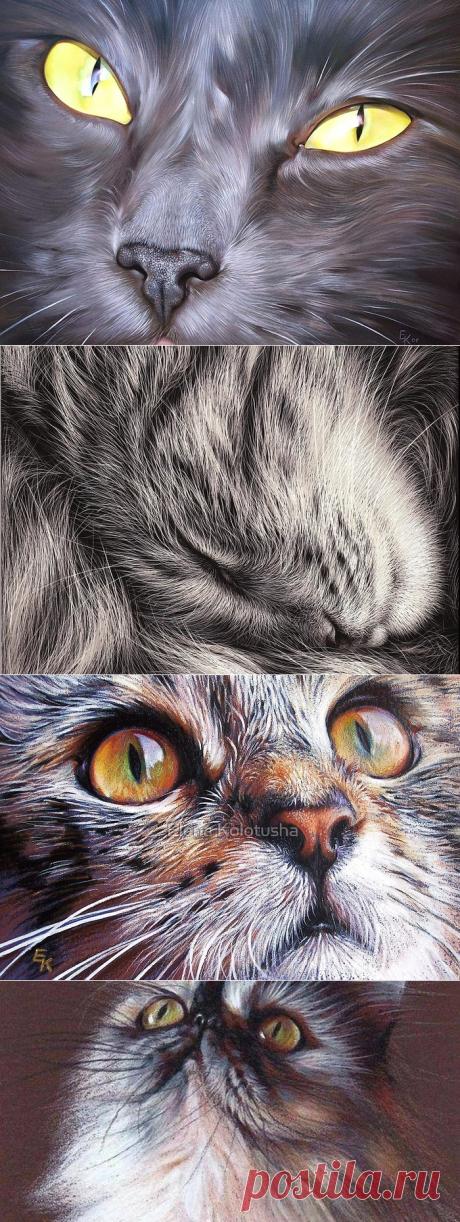 Гиперреалистические портреты котов от Елены Колотуши