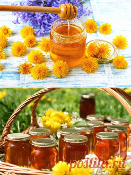 Мед из одуванчиков — польза и рецепты - My izumrud