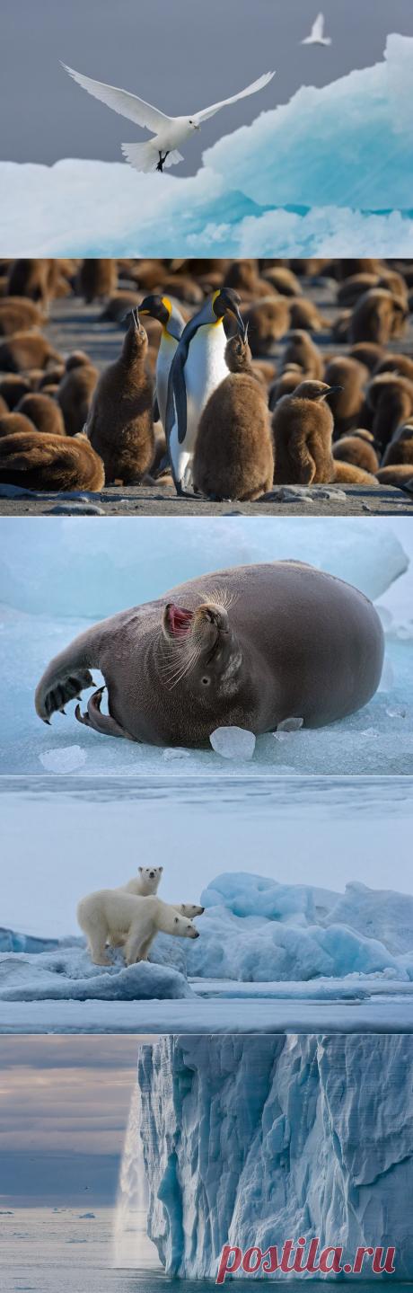 Холодная красота Арктики - Путешествуем вместе