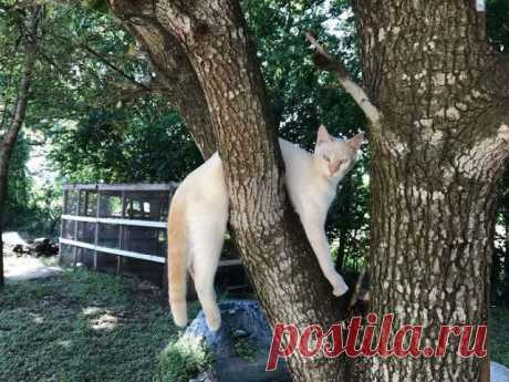 Кошки, которые сломались / Питомцы