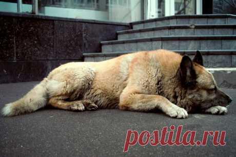 Рай для собак существует, и он находится в греческом острове. Там бездомных собак пускают на ночлег в кафе.