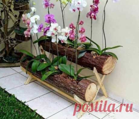 Оригинальная идея для размещения орхидей!