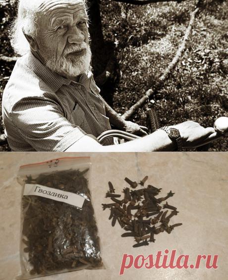Дед посоветовал жевать сушёную гвоздику, когда попробовал - убедился в её пользе: 5 удивительных качеств   PRO-ЗОЖ   Яндекс Дзен