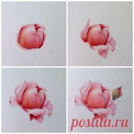 Рисуем розы акварелью: мастер-класс — Сделай сам, идеи для творчества - DIY Ideas