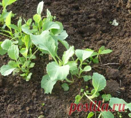 Crops in soil, recommendations for 2017 — 6 hundred parts