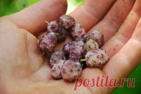 Этот впечатляющий плод удивил мир медицины, благодаря своей сильной способности бороться с диабетом и высоким кровяным давлением - Советы для женщин