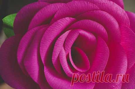 Как сделать красивые цветы из бумаги