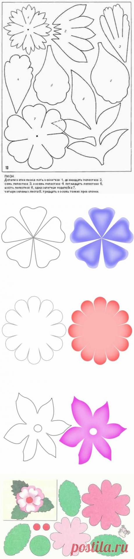 Шаблон цветочков для вырезания. Шаблоны цветов для вырезания из бумаги, которые можно распечатать
