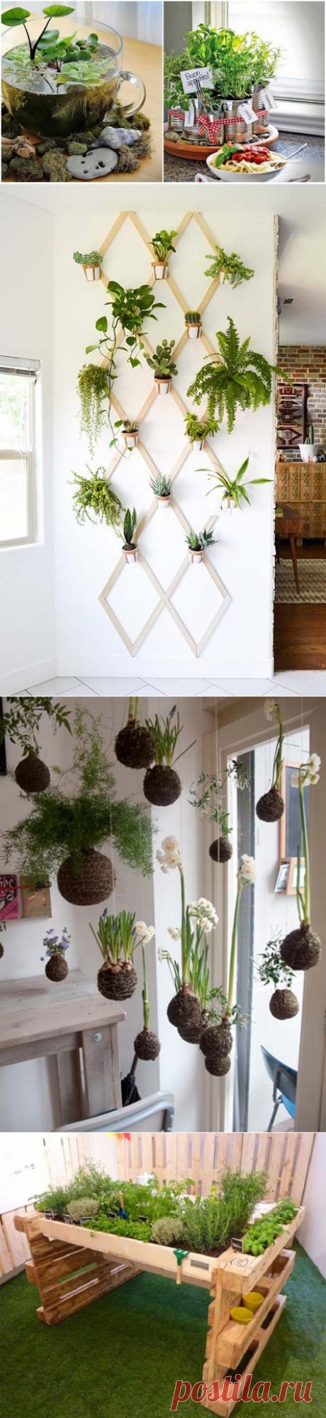 Идеи для мини-сада в квартире — Мой дом