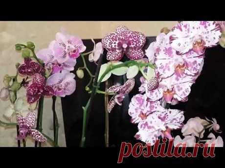 Секреты от цветовода про реанимашки как нарастить корни у погибающей орхидеи. - YouTube
