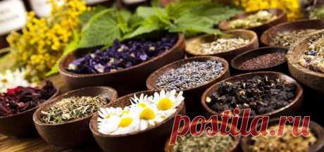 Лечебные чаи при хронических заболеваниях легких