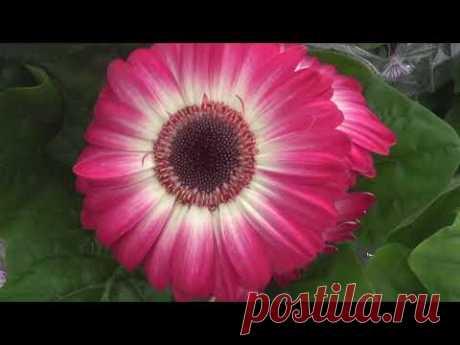 Цветущие растения в Леруа - YouTube