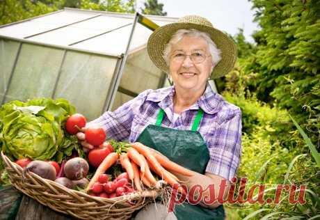 30 дел, которые нужно сделать в августе в саду, огороде и цветнике | Новости (Огород.ru)