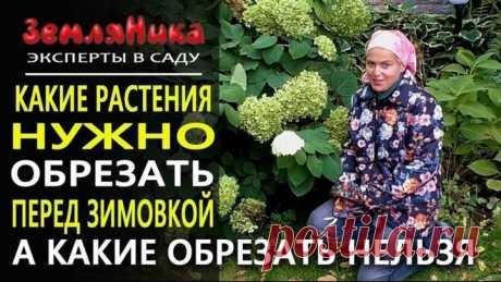 Осенняя обрезка растений. Как обрезать растения на зиму. Готовим сад к зиме. Ольга Воронова.