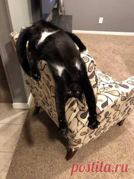 С котом в доме скучно не бывает