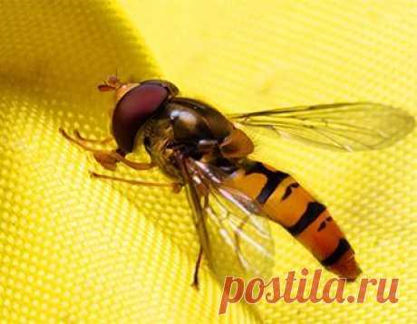 Укус осы, пчелы: первая помощь, и как отличить обычную реакцию от аллергической      Несмотря на огромную численность перепончатокрылых на планете, правила первой помощи при их укусе знают немногие. Зачастую конкретный перечень действий известен только аллергикам, ведь их жизни в…