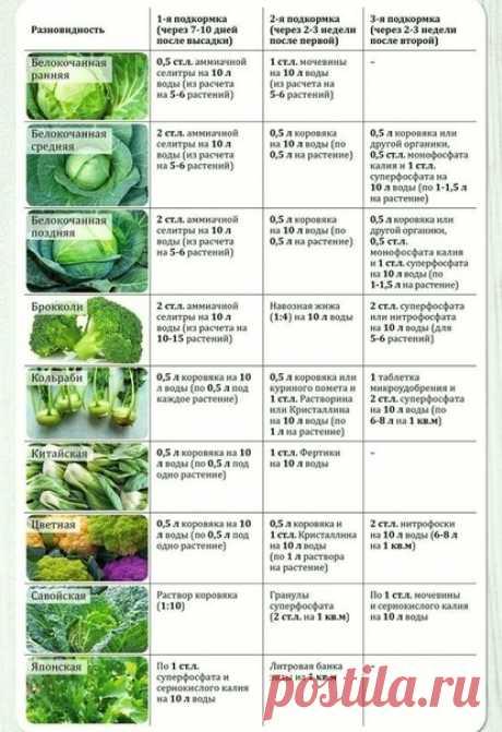 Правильные подкормки для любой капусты, уникальная инфа!