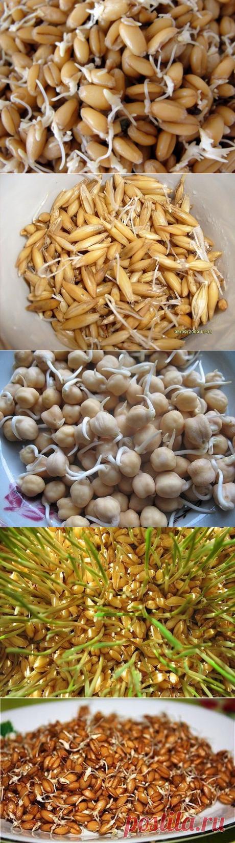Проростки зерновых для здоровья