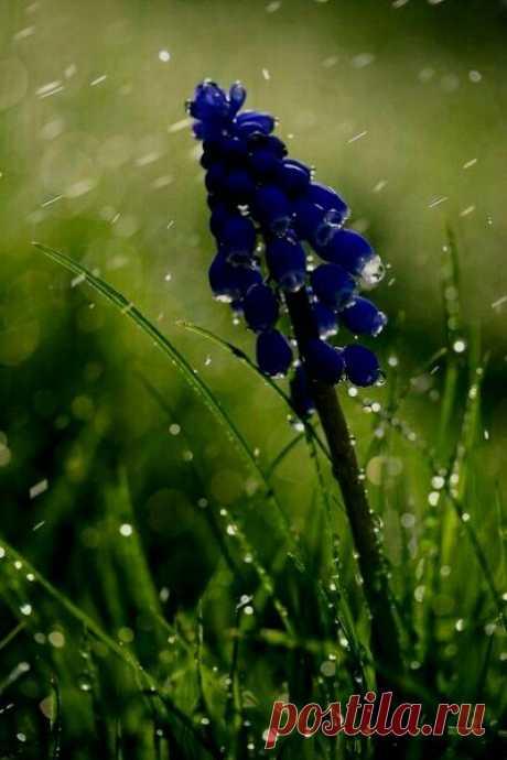 Всё на свете взаимосвязано, вот так и дождь связывает друг с другом всех на всей земле, по очереди касаясь каждого...