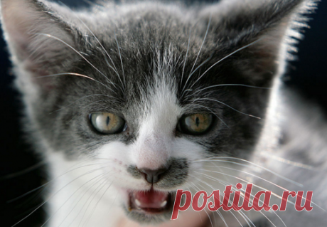 Scientists classified cat's purring | News | Round the world