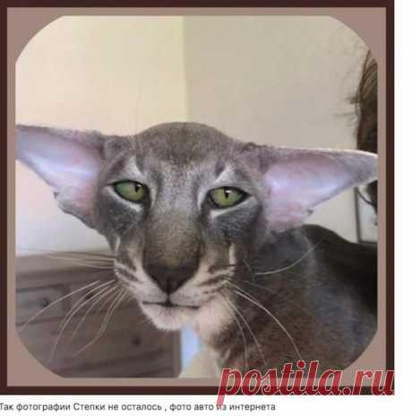 ТОП-5 рецептов вкуснейшего печенья - МирТесен