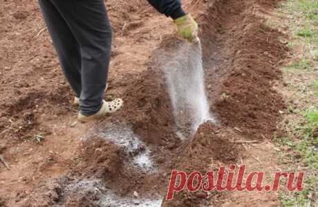 Использование соли в огороде! Волшебная соль... Иногда вместо удобрений и ядохимикатов можно использовать самые обычные продукты такие как соль, сахар, чеснок, кефир, горчица. Вот, например, видим на томатах первые признаки фитофтороза. Чтобы спасти плоды, надо ускорить их созревание. В этих целях обычно советуют подкормить томаты калием и фосфором. Но есть способ лучше и проще. Возьмите на 1 л воды 100 г поваренной соли и этим раствором опрыскайте заболевшие растения. После такого опрыскиван