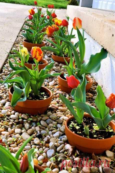 Клумба из горшков  Идея такая. Растения высаживаются в горшки, а те, в свою очередь, закапываются в землю. Получается оригинально и удобно. Можно легко заменить горшок с увядшим цветком, поменять схему расстановки и даже перенести клумбу на другое место.