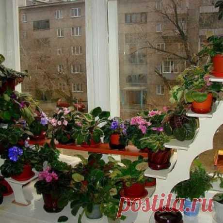 Какие цветы посадить на подоконнике?