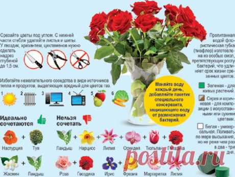 Цветочное счастье Толи Руденко