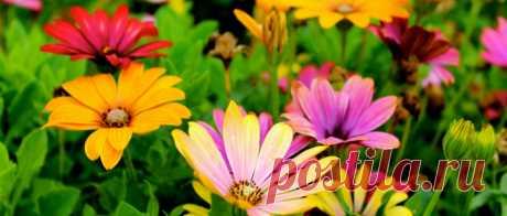 Шикарный цветник без вредителей и болезней
