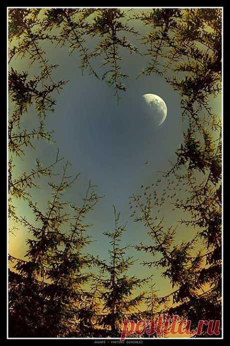 Луна сквозь деревья