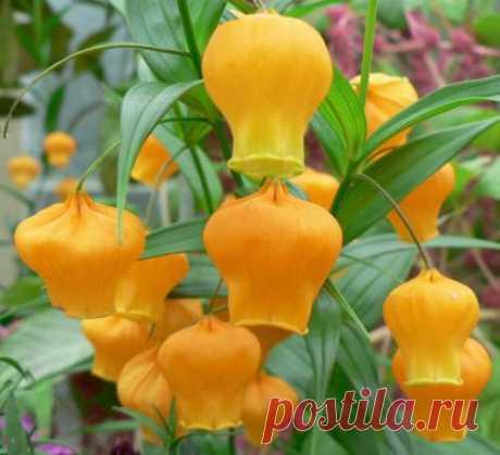 Удивительные садовые цветы и растения