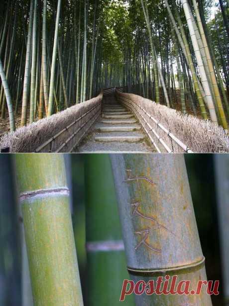 Бамбуковый коридор