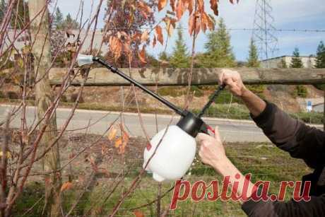 Сроки проведения обработки сада мочевиной с медным купоросом весной   6 соток