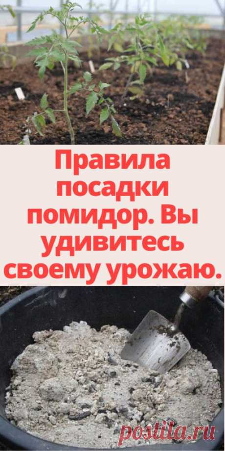 Правила посадки помидор. Вы удивитесь своему урожаю. - My izumrud
